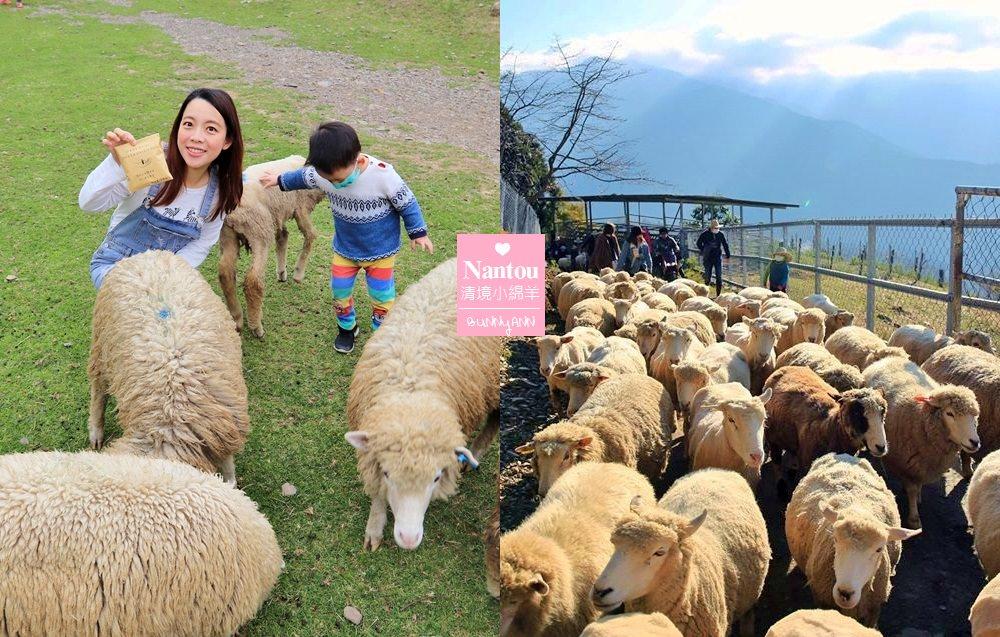 南投景點》來找羊咩咩一起奔跑!清境農場最萌小棉羊群,一大票羊群帶頭草原散步~