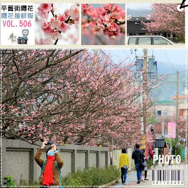 『台北景點』2017平菁街42巷櫻花綻放,粉嫩櫻花搶鮮報~