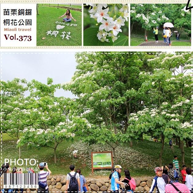 『苗栗桐花季』2014客家大院油桐花開,桐花公園4/20花況。