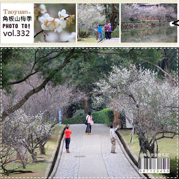 『桃園』角板山梅花季,冬季限定景色(1/2花況)。