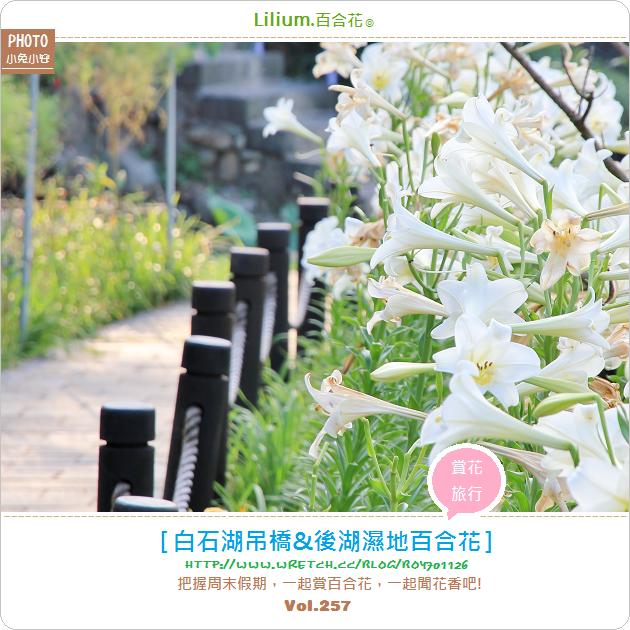 『百合花』放假賞花~白石湖吊橋&後湖溼地百合花開(5/31花況)