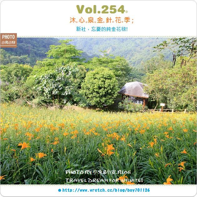 『金針花季』新社沐心泉,令人忘憂的金色花毯(5/25花況)。
