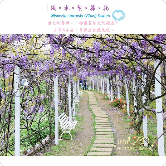 『淡水』季節限定夢幻色,紫藤咖啡園,紫藤花開了。