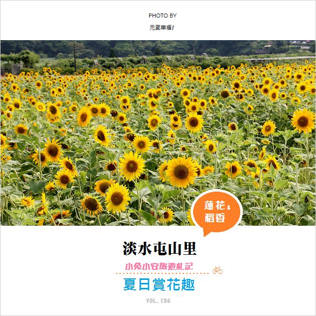 『夏日特刊-Vol.3』淡水屯山里花田,今年夏天盛開中~