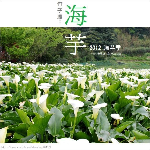 『春遊海芋』2012陽明山竹子湖海芋季,倘佯潔淨無暇花田間 。