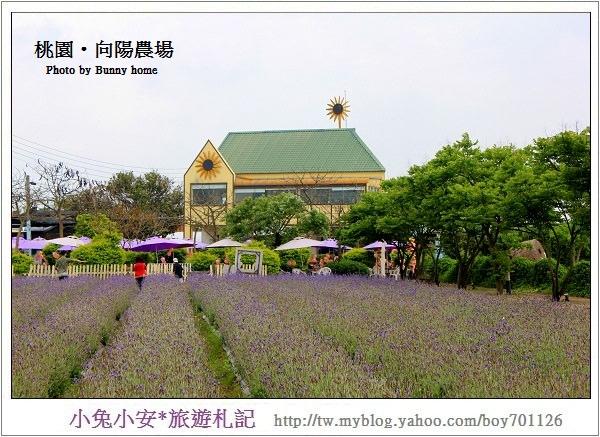 『桃園旅遊』漫遊在薰衣草田滿開的向陽農場。