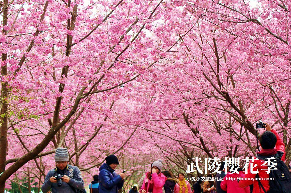 2018武陵農場櫻花季 | 武陵櫻花季2月16日登場購票資訊。