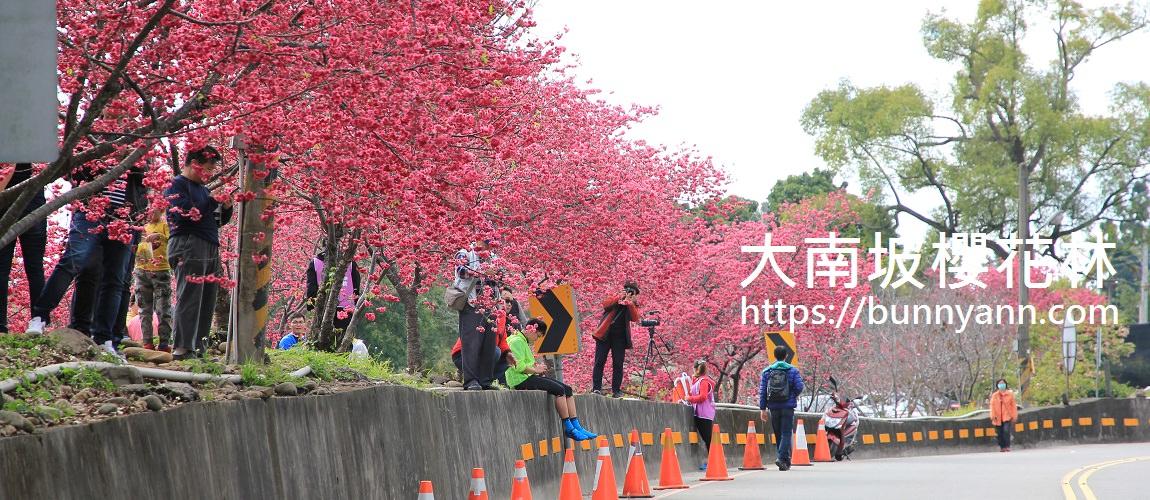 大南坡櫻花