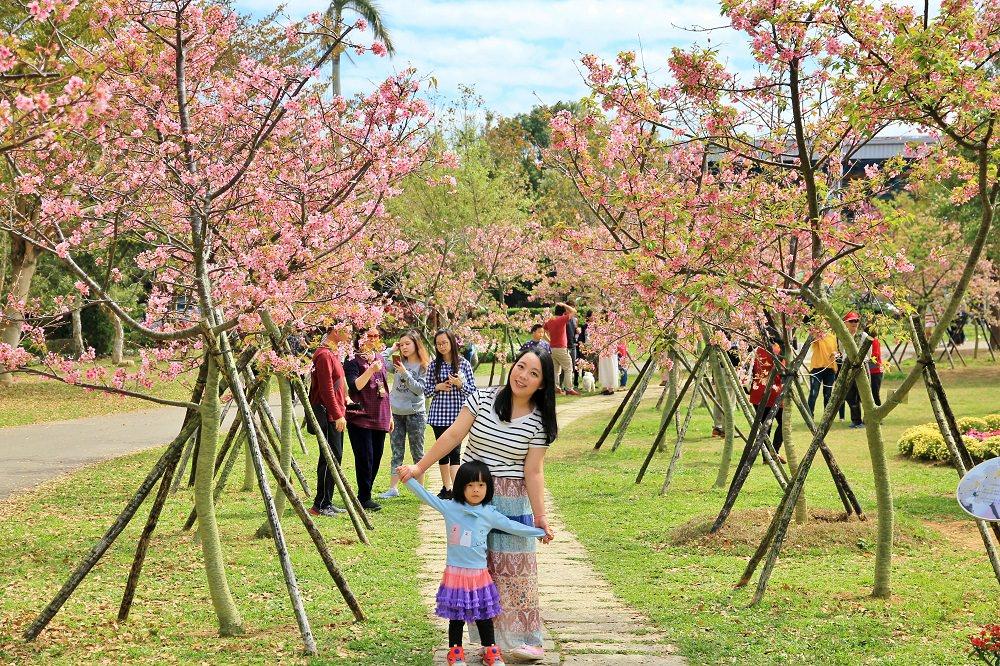 台中櫻花季 | 后里崴立機電粉紅櫻花風暴,千坪櫻花園免費參觀拍照!