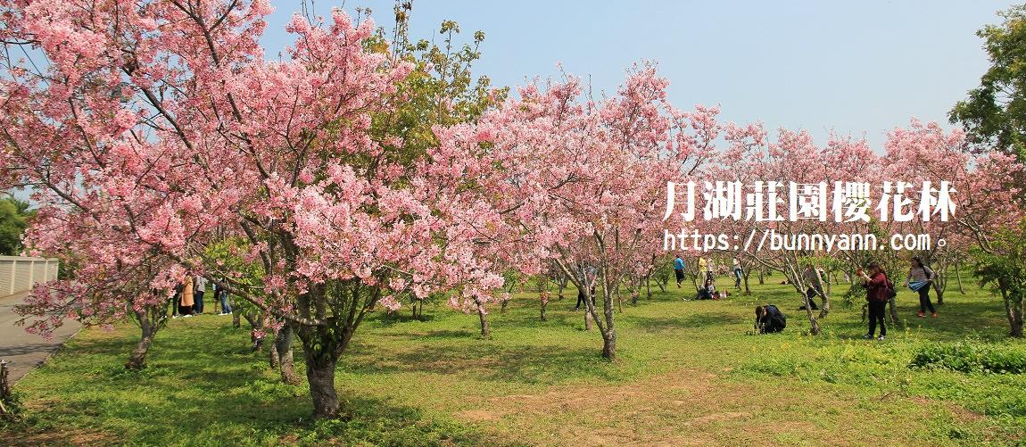 月湖莊園櫻花