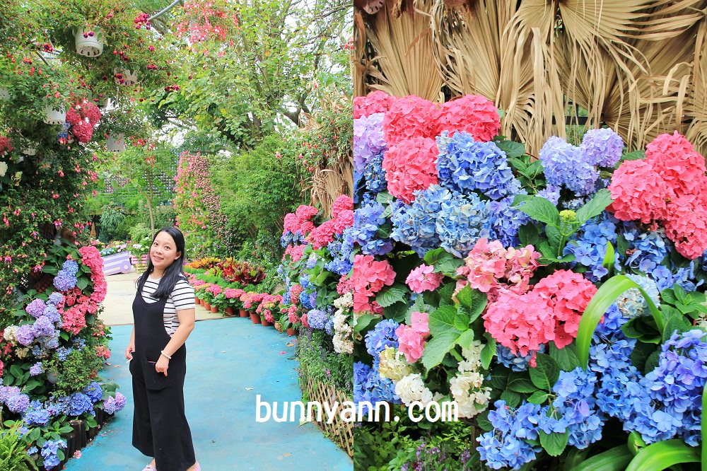 花露繡球花季 | 卓蘭花露農場繡球花一日遊,超好拍夢幻繡球花牆、城堡、玫瑰花園等你來。