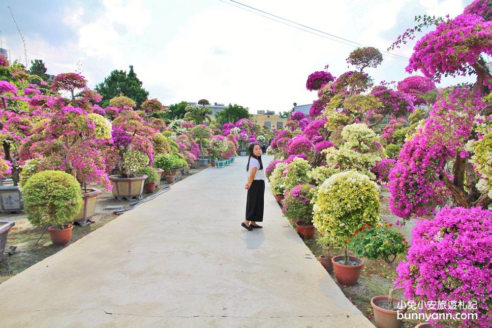 『彰化新景點』輝豐園藝絕美花世界,夢幻九重葛之家保證拍到相機沒電!