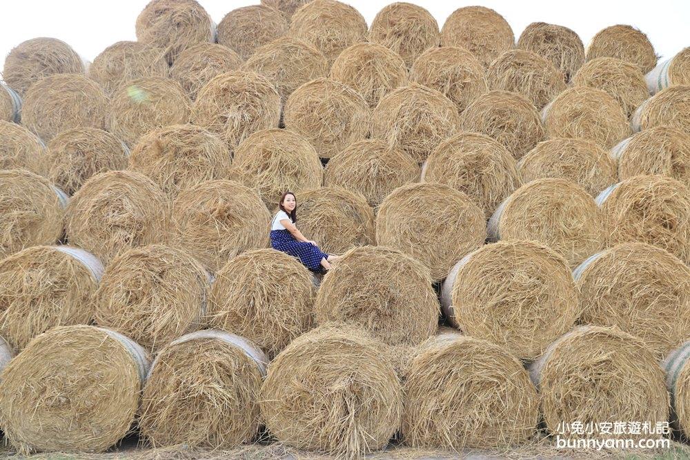 雲林景點》虎尾稻草卷~天然巨大稻草捲心酥超可愛!季節限定趕快來~