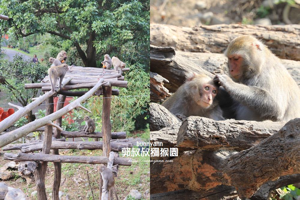 台中景點》郭叔叔獼猴園,可愛小猴子照鏡子吃水果,獼猴餵食秀超厲害!