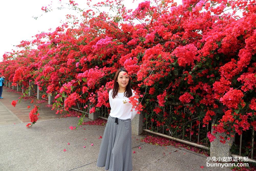 台中景點》中科九重葛瀑布花牆, 東大公園浪漫盛開中,季節限定美景!