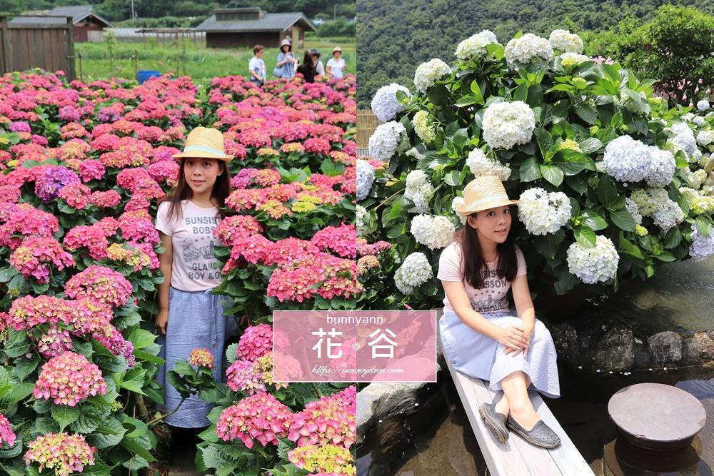 竹子湖繡球花》2019強勢登場!全新賞花秘境花谷繡球花園,繽紛色花球大爆發!