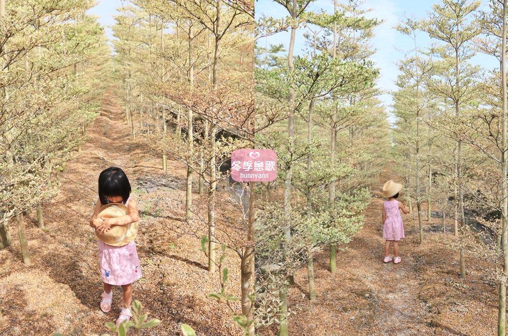 彰化景點》田尾小葉欖仁森林,美拍韓劇冬季戀歌浪漫邂逅場景!