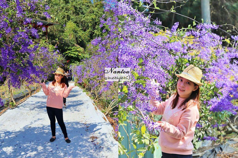南投景點》埔里紫色花海走廊小秘境!美拍浪漫紫色風暴,本月最美季節限定色~