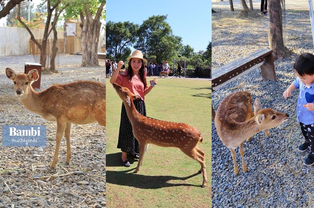 全台》收錄本島五大人氣台版小奈良,與可愛斑比小鹿互動超有愛!