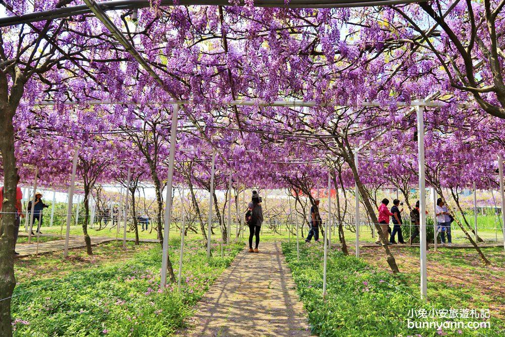 新北景點》季節限定色!淡水紫藤咖啡園屯山園區,浪漫紫藤天空、花廊等你來拍~