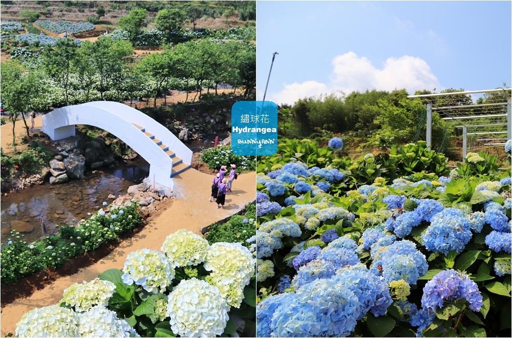 新北景點》高家繡球花田萬里第三園區,8000坪繽紛繡球花海隨你拍!