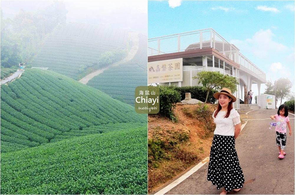 嘉義景點》海鼠山1314景觀平台,5分鐘漫步小清新茶園,無死角視野超美~