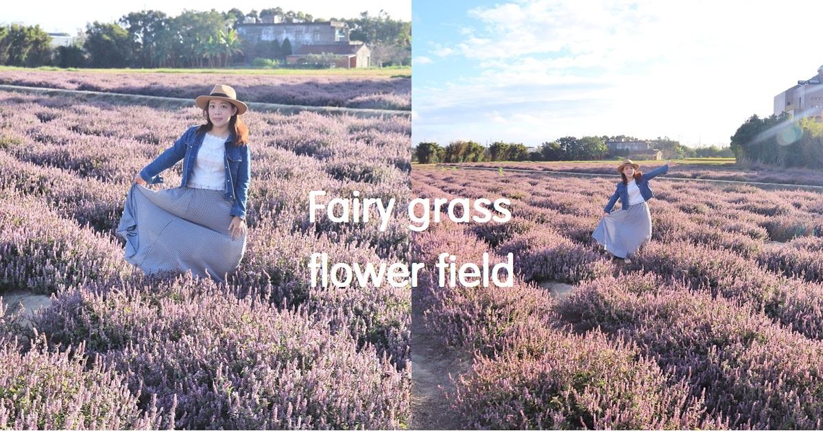 桃園》紫色花海搶先拍!禾山田仙草花現在就能拍,美麗普羅旺斯景色在這