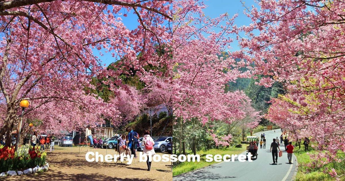 全台》追逐浪漫!TOP10全台櫻花景點,賞櫻秘境、地點介紹,花期公佈。